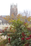 Holiday decorations spread cheer across campus