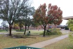 Trees on campus sustain damage after storms