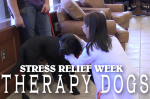 Therapy Dogs [Video]